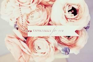 Фотография цветов - кремовая роза для фона растровый клипарт