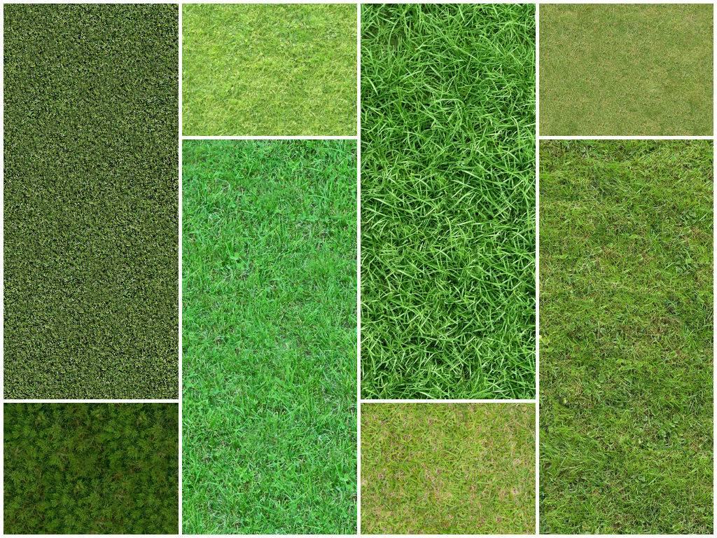 Текстура травы разной цветовой гаммы