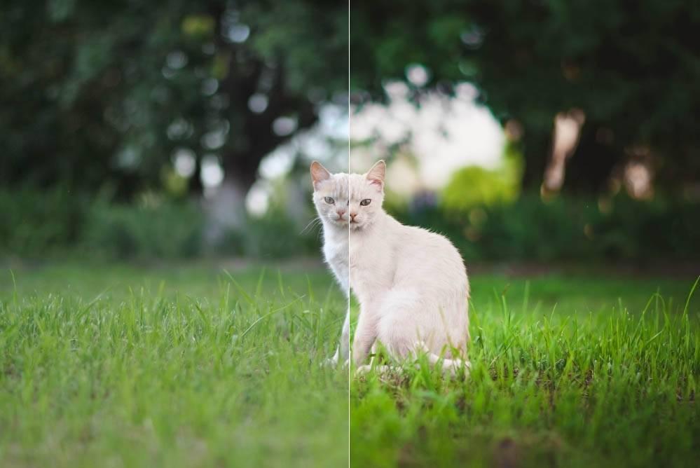 Пресет для lightroom - кот на зеленой траве