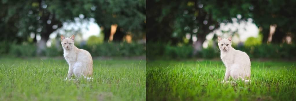 Пресет для lightroom - кот на зеленой траве до-после