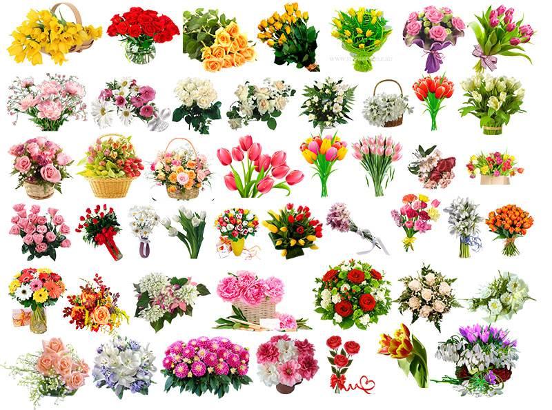 Растровый клипарт цветов на прозрачном фоне более 50 видов