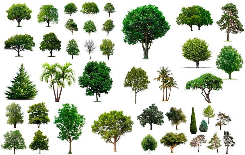 Растровый клипарт - набор деревьев на белом фоне 50+ штук