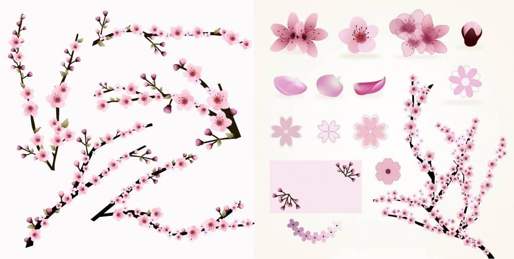 Набор цветущих цветов сакуры - векторный набор