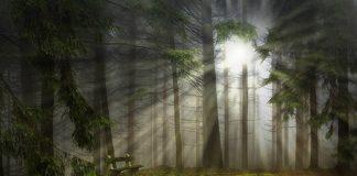 Добавляем лучи света на Фотографию в фотошопе - Результат