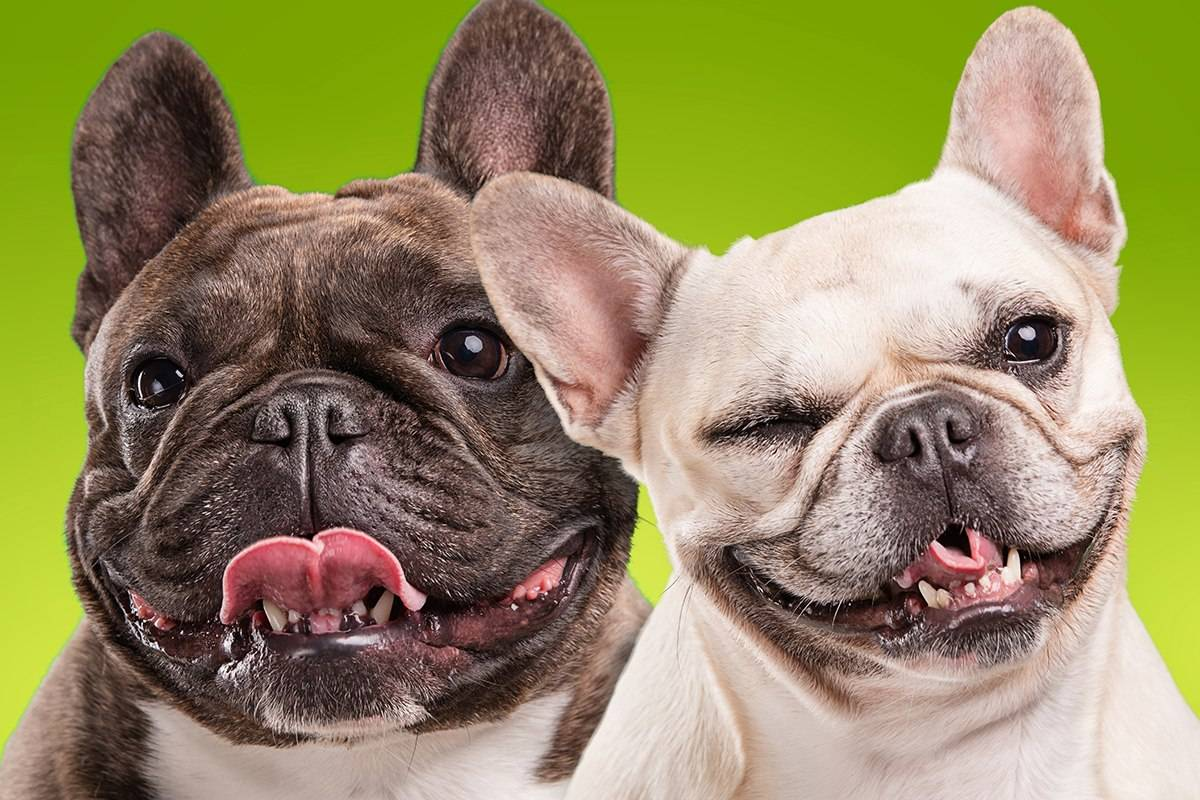 raster-graphics-funny-faces-dogs
